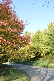 gradina botanica octombrie 2012 014