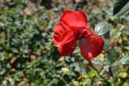 gradina botanica octombrie 2012 018