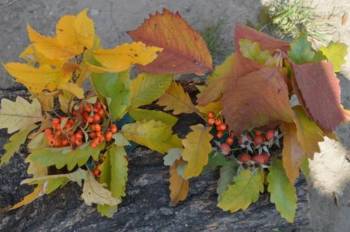 gradina botanica octombrie 2012 158