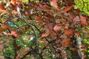 gradina botanica octombrie 2012 287