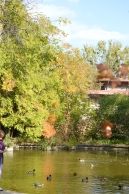 gradina botanica octombrie 2012 288