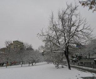 prima zăpadă 06