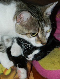 Mica şi puiul adoptiv