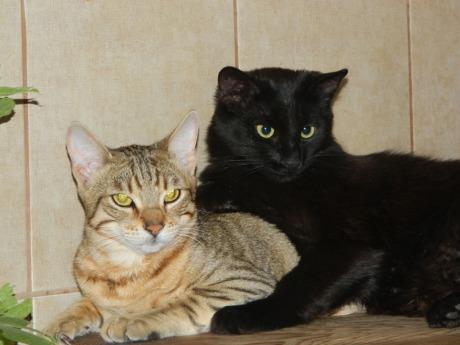 Iubire mare - Ro cel mic şi Negru-Gheorghe