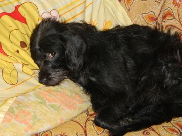 Poziţia preferată de somn a lui Bety